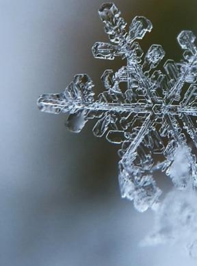 Mantenimiento del césped en invierno