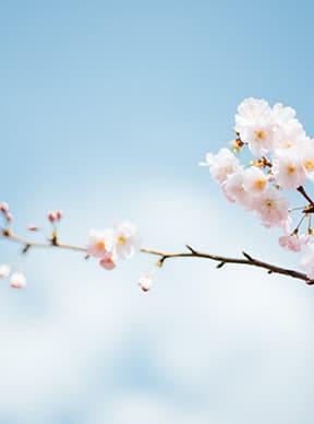 Mantenimiento del césped en primavera